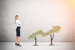 Businesswoman and plant graph. Businesswoman in a white blouse is standing near a plant graph. There is a concrete wall in the background. Mock up Stock Photography