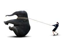 Businesswoman pulling elephant on white. Businesswoman pulling elephant with rope on white background Stock Photos