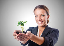 Businesswoman with seedling on white Royalty Free Stock Photography