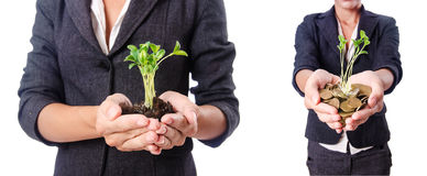 The businesswoman with seedling on white Royalty Free Stock Photos