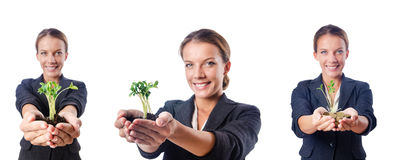The businesswoman with seedling on white Royalty Free Stock Photography