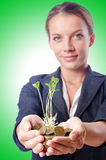 Businesswoman with seedlings Royalty Free Stock Photography