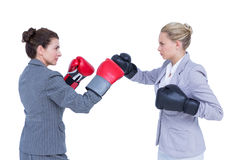 Businesswomen with boxing gloves fightin Royalty Free Stock Image