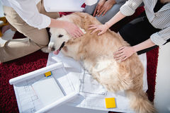 Businesswomen petting furry dog near blueprints with digital tablet Royalty Free Stock Photo