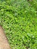 buskar Royaltyfri Foto