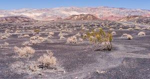 Buskar i öknen fotografering för bildbyråer