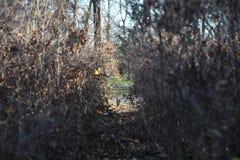Buskar i en parc Fotografering för Bildbyråer
