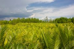 Buskar i natur Arkivbilder