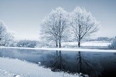 Buskar i snow Arkivbilder