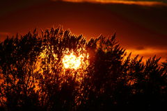 Buskar med solnedgång Arkivbilder