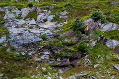 Buskar och lychens på steniga substrater i de schweiziska fjällängarna Royaltyfri Fotografi