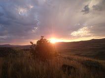 buskar och solnedgångsikter Arkivfoton