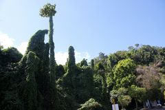Buskar och träd av Ao Nang nära Krabi i Thailand Fotografering för Bildbyråer