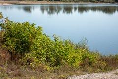 Buskar på flodbanken royaltyfri fotografi