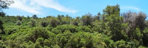 buskar räknade gröna kulltrees Arkivfoton