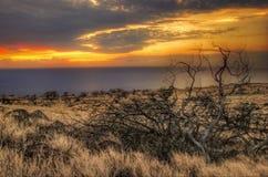 buskar soliga hawaii Arkivfoton