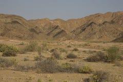 Buskar som växer i ett torrt klimat. arkivfoton