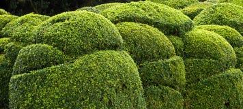 buske Arkivfoto