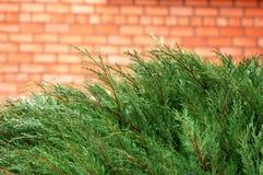 buske Royaltyfri Fotografi