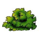 buske vektor illustrationer