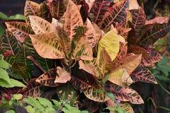 buske Fotografering för Bildbyråer