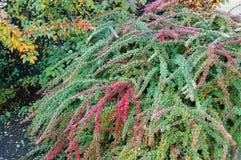 buske Arkivfoton