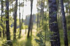 buske av ett ungt träd Royaltyfria Bilder