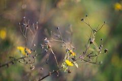 Buske för lös blomma Arkivfoto