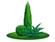 Buske för Thujaträden på gräset Fotografering för Bildbyråer