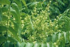 Buske f?r vita blommor V?xter i parken Krypet samlar pollen Ett bi eller en geting arbetar arkivbild