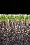 buske klippt green Arkivfoto