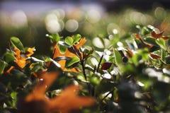buske och blad arkivfoto