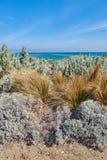 Buske och gräs på stranden Royaltyfria Bilder