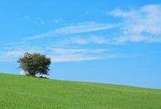 Buske på kullen fotografering för bildbyråer
