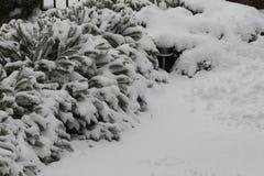 Buske under lott av snö royaltyfria bilder