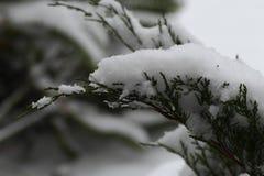Buske under lott av snö royaltyfri bild