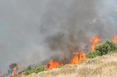buskebrand Royaltyfri Fotografi