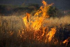 buskebrand Arkivfoton