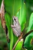 buskecommongroda Arkivbilder