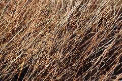 Buskefilialer f?r naturlig bakgrund Torka filialer av tr?d Bush busksn?r royaltyfria foton