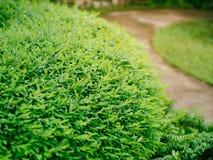 Buskegräsplan i trädgården arkivbilder