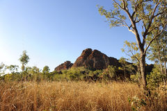 buskeland outback Arkivbilder