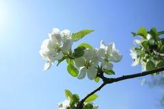 busken blommar fjädern Royaltyfri Bild