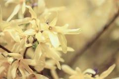 busken blommar yellow Arkivfoto