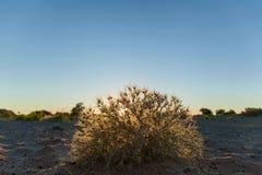 Busken på den sandiga stranden Fotografering för Bildbyråer