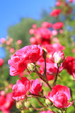busken steg Royaltyfri Fotografi