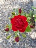 busken steg Royaltyfri Foto