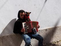 Busker With Small Dog And Accordion. Young man busking in Lisbon Portugal with his small dog and accordion Stock Photo