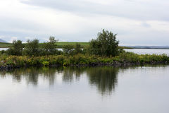 Buskereflectin i lugnt vatten av Myvatn sjön, Island royaltyfri foto