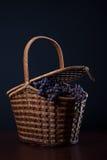 Busket con i mazzi bagnati blu dell'uva di Isabella su fondo scuro Fotografia Stock